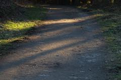 Shady path (dididumm) Tags: shady dusk evening sunshine spring path wood woods forest walk spaziergang wald pfad weg frühling sonnenschein abend dämmerung abenddämmerung schattig