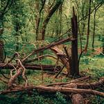 Errie Dead Tree thumbnail