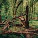 Errie Dead Tree