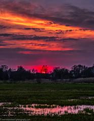 Sunset in the meadows of Gosen (Steppenwolf33) Tags: meadow swamp gosen neuzittau sunset dawn steppenwolf33
