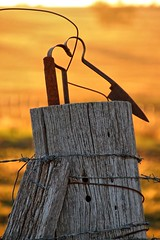 Click go the shears (Ian Ramsay Photographics) Tags: cumnock newsouthwales australia clickgotheshearsshears australian woolgrowers property fence post sheep rural folklore