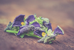 dying pansies... MM (Ayeshadows) Tags: macromondays pansies blue dying last these flowers eye beholder