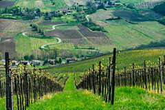 Vineyards of Oltrepo Pavese in April (clodio61) Tags: april cicognola europe italy lombardy oltrepopavese pavia agriculture color country day field green hill land landscape nature outdoor photography plant road rural scenic spring springtime sunny town village vine vineyard winding