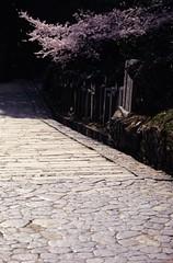 Cobbled Stairs (Tarepooh) Tags: 石畳 桜 階段 東大寺 奈良 sakura todaiji temple cherryblossoms stairs cobblestone