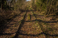 Reclaimed by nature.... (Dafydd Penguin) Tags: beeching railway closure rail train overgrown disused abandoned nature tracks wye valley gloucestershire uk leica m10 21mm super elmar f34