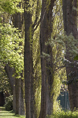 A line of trees - Leazes Park, Newcastle upon Tyne (alisonhalliday) Tags: trees park green nature canoneos77d sigma105mm tmt