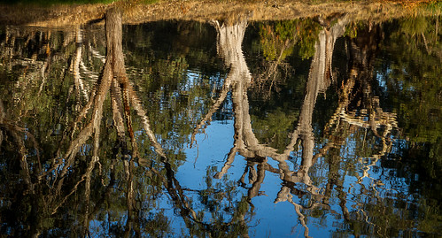 Three reflections
