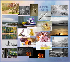 April was so fleeting ... and it is gone! (Elisafox22) Tags: elisafox22 april 2019 collage snapshot images summary thumbnails border leaves flowers landscape sunshine trees plum plumblossoms abstract macro cheese forks kokeshi kokeshidoll freesias fences eggshells pink japaneseplum indoor stilllife spring blackandwhite postprocessing infrared aberdeenshire scotland elisaliddell©2019
