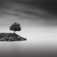 Helsinki (frodi brinks photography) Tags: finland helsinki minimalism frodibrinks tree seascape
