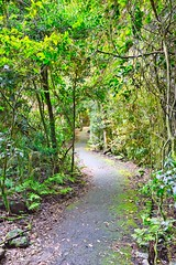 Rainforest Path (simonmgc) Tags: bestofall forest gondwana jungle path rainforest springbrook