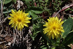 Wild Flowers (Hugo von Schreck) Tags: hugovonschreck wildflower wildblume macro makro canoneosm50 tamronsp90mmf28divcusdmacro11f017