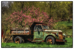 Rust in Springtime (* Gemini-6 * (on&off)) Tags: trees green spring flower blooms truck rust decay abandoned chevy hdr framed nature vehicle transportation