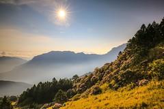 合歡山杜鵑花季與日出(Sunrise with Alpine Rhododendron @ Hehuanshan)。 (Charlie 李) Tags: alpinerhododendron eastpeak hehuanshan sunrise 日出 東峰 高山杜鵑 玉山杜鵑 杜鵑花 合歡山