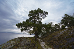 The Pine at Ingierstrand