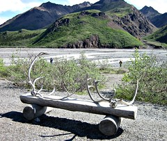 Cariboo Antlers (R D C) Tags: 2012 ak denalinationalpark nationalparks alaska mountains