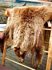 Grizzly Bear Pelt (R D C) Tags: 2012 ak denalinationalpark nationalparks alaska
