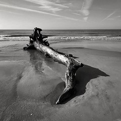 Beached Tree - Hilton Head Island (Lee Edwin Coursey) Tags: instagram ifttt hiltonhead hiltonheadisland vacation travel 2019 beach ocean southcarolina usa