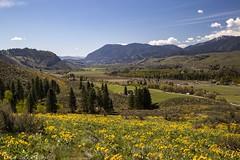 Yellow, Green and Blue (Ed.Stockard) Tags: arrowleafbalsamroot wildflower spring bloom springtime flowers methow methowvalley twisp wa washington yellow green blue sky