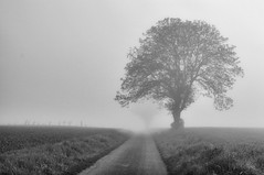 Foggy morning6 (Franck gallery) Tags: fog brouillard blackwhite noirblanc road route coutryland campagne morning matin silhouette shape d90