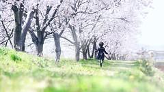 風薫る (のの♪) Tags: 桜 spring girl cherryblossom breezz light