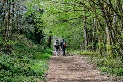 74-Retour au gîte (Alain COSTE) Tags: 2019 forêt hautevienne lavarache limousin nikon ocb printemps randonnée eymoutiers france