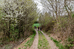 16-Le chemin devient une route (Alain COSTE) Tags: 2019 forêt hautevienne lavarache limousin nikon ocb printemps randonnée eymoutiers france