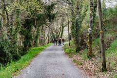 18-La montée devient descente (Alain COSTE) Tags: 2019 forêt hautevienne lavarache limousin nikon ocb printemps randonnée eymoutiers france