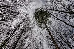 46-Perpective printanière (Alain COSTE) Tags: 2019 forêt hautevienne lavarache limousin nikon ocb printemps randonnée eymoutiers france