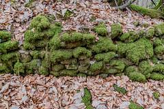 48-Muret moussu (Alain COSTE) Tags: 2019 forêt hautevienne lavarache limousin nikon ocb printemps randonnée eymoutiers france