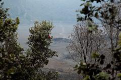 Kilauea Iki, Hawaii Volcanoes National Park, Hawaii (Roger Gerbig) Tags: kilaueaiki hawaiivolcanoesnationalpark kilauea volcano hawaii bigisland island rogergerbig canoneos5dmarkii canonef24105mmf4lisusm 3014
