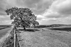 Old Winchester Hill, Hampshire (Art-G) Tags: oldwinchesterhill hampshire uk trees fields bw blackandwhite monochrome hdr photomatix canon eos7dmkii efs1018isstm