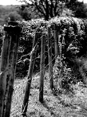 In the field (PHOTOGRAPHY Toporowski) Tags: black white blick light shadow schärfentiefe contrast landschaft bw sw nature schwarz weis landscape frühling schatten natur bokeh licht eschweiler nrw nordrheinwestfalen deutschland