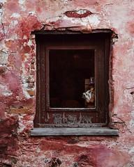 A través de la ventana... (Irene Carbonell) Tags: ventanas explore fachadas travel coloniadelsacramento nikon 50mm