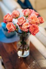 Spring Roses (Graham Gibson) Tags: nokton voigtlander 40mm f12 a7rii sony fe