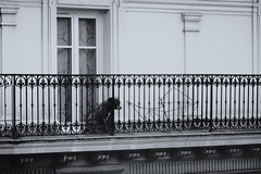 They will look on (shakeawhati) Tags: dogs xt3 135mm vintagelens paris streetphotography cute cuddly sad