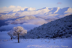 Sunrise In The Pyrenees (Nicholas Ferrary) Tags: nicholasferrary nature nikon nikond800e nikond810 nikon200400mmvr d800e d810 200400mm vr2 nikon200400vr2 pyrenees lleida landscape landscapephotography snow snowfall mountain trees tree clouds cliff clifftops peaks iberia iberianpeninsular naturaleza naturephotography naturereserve buseu