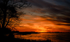 Dusk (RWGrennan) Tags: sunset nebraska platte river sandhill crane migration sky color water silhouette flight iain nicolson audubon center rowe sanctuary gibbon nature earth wildlife landscape travel midwest rwgrennan rgrennan nikon d610 sun bird birds cloud orange grus canadensis tree dusk