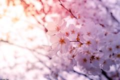 The beautiful (gusdiaz) Tags: spring primavera fuji fujifilm nature naturephotography beautiful flowers blossoms retoños flores sun sunrise sunset sunny asoleado amanecer atardecer hermoso foliage vegetacion