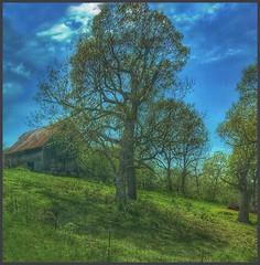 Up yonder.... (Sherrianne100) Tags: spring hff fence barn hills ozarks missouri