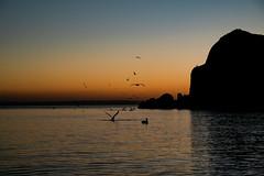 Atardecer Playa Balandra (gyogzz) Tags: paisaje landscape la paz sunset beach bird sony alpha a7sii