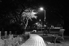 Daan Forest Park (theq629) Tags: taiwan taipei daan daanforestpark path lamp bench pond