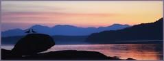 Have a lovely weekend Dear Friends! 😘👋 (EEVIONNIK (bitmap_idx)) Tags: gandsfjorden vaulen norge norway sunrise weekend fjord water mountains