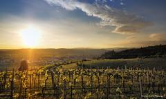 Soave1 (fanton maurizio) Tags: olympus zuiko omd 10 12f2 soave verona italia italy landscape mirrorless sunset golden hour tramonto flickr