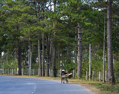 A woman biking on mountain road (phuong.sg@gmail.com) Tags: asia central cloud curve dalat danang destinations famous green high highland landmark landscape locations mountain natural nature northern outdoor overview pass place road route sapa scene scenery serpentine sightseeing silence stationary street sunny tourism tranquil travel valley vehicles vietnam