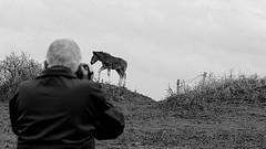 Horse and camera (patrick_milan) Tags: perrine girl camera man horse finistere bretagne