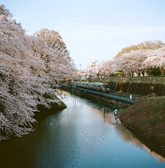 1201-02 (karl0513) Tags: film filmphotography filmisnotdead sakura japan 120film mamiya6mf
