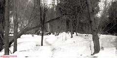 The path to the river (DelioTO) Tags: 6x12 aph09 beaches blackwhite canada curved d23 f317 landscape ontario panoramic pinhole r091100 rain rural snow toned trails winter woods