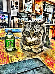 2019 123/365 5/3/2019 FRIDAY - Guardian Of The Sake (_BuBBy_) Tags: ace cap alcohol drink puss cat tabby sake the of guardian fr fri friday third 3rd may 03 05 3 5 532019 project365 365days 365 123 123365 2019