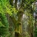 und noch ein Baum aus dem nahen Wald / and another tree from the nearby forest