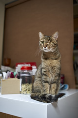 A9__DSC0013_C1 (Bazoka+Cynthia) Tags: cat 小婆 新北市 樹林區 貓 鼻孔